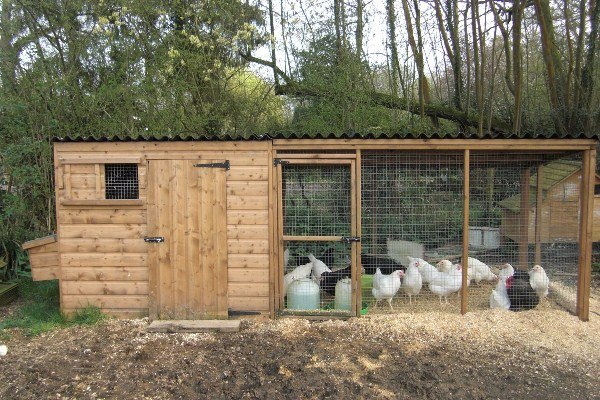 wooden chicken coop with a paddock