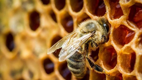 Bee on honeycomb