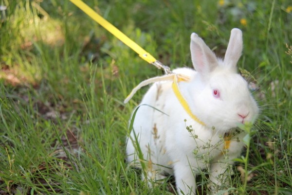 How to care for rabbits