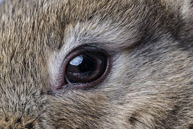 Rabbit eye diseases