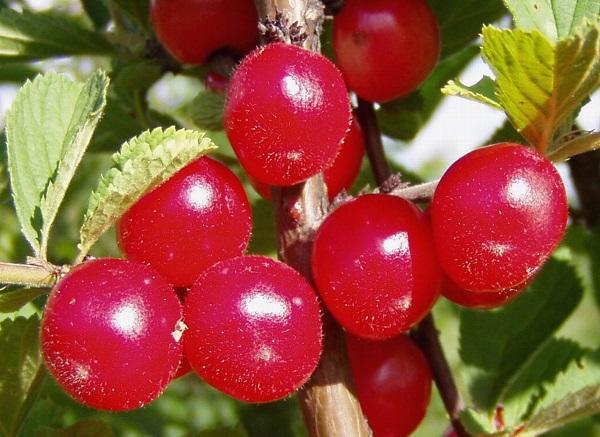 Felt cherry