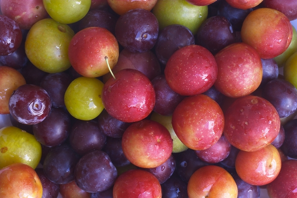 Choose the best varieties of plums for growing according to the characteristics