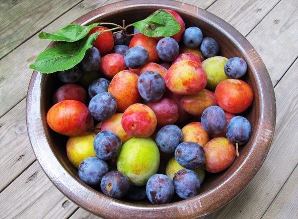 The main differences between plums and cherry plums, their chemical composition, benefits and harm to the body