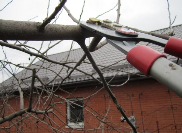 Proper pruning pruning in spring, autumn: scheme and recommendations