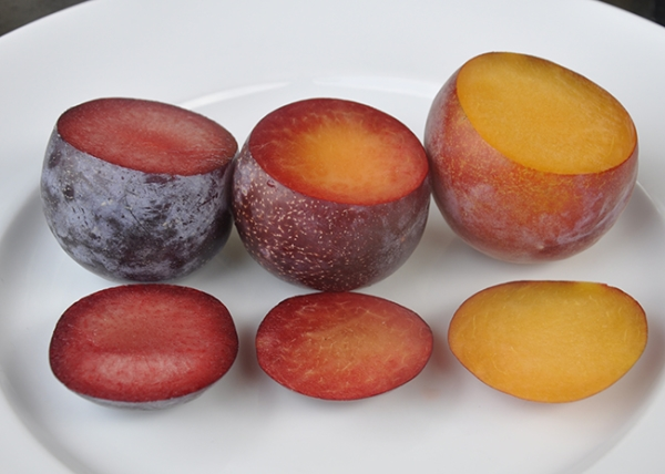 The most unusual hybrids of apricot, peach, plum and apple, their description, advantages and disadvantages