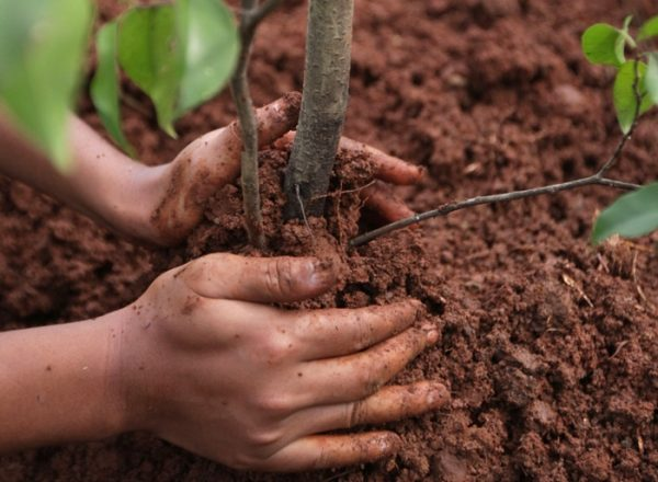 How and when it is better to plant and replant the drain: a step by step guide for planting and care