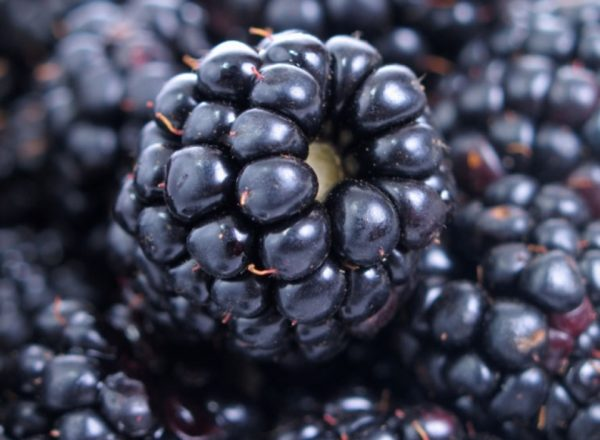Composition, useful properties and contraindications of blackberry, medical and cooking recipes