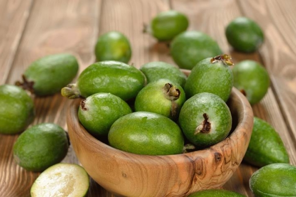 The benefits and harm of feijoa, useful properties and contraindications, recipes