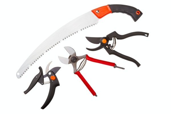 A pruner, hacksaw, garden knife and lopper must be sharpened and sanitized.