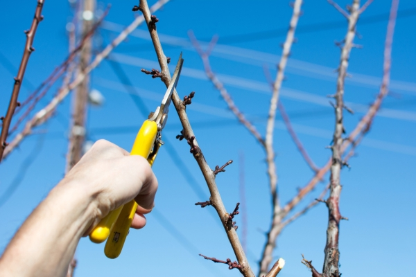 Pruning pruning: how and when to do the procedure