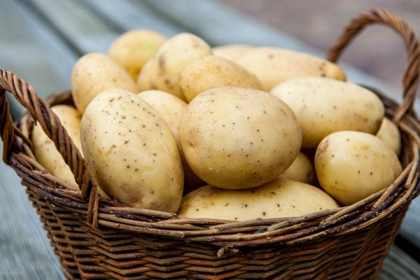 The best varieties of potatoes