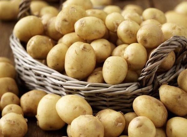 Early potato varieties