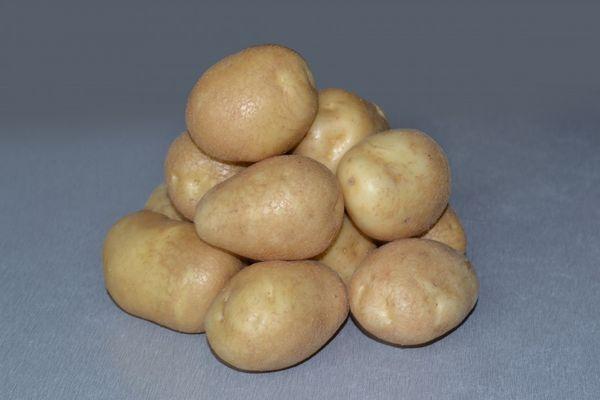 Potato varieties Luck