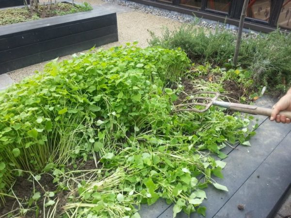 siderata in the garden