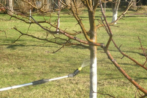 In addition to trees, it is desirable to spray adjacent areas