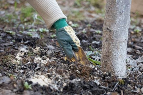 Autumn fertilizer
