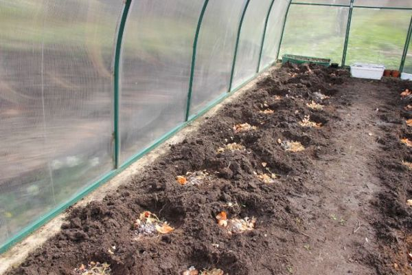 Organic matter must be added to the wells or beds before planting.