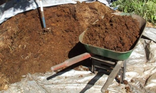 Manure is better not to use fresh