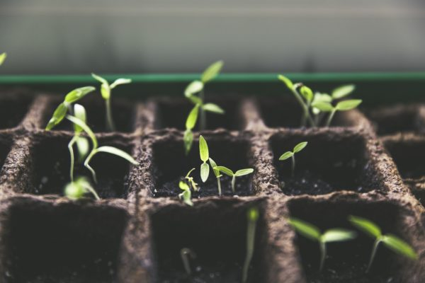 Cucumber planting takes place in May